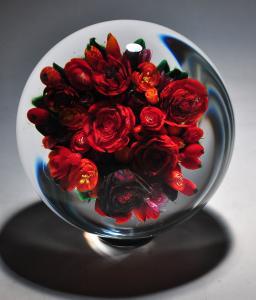 Super Magnum Rose